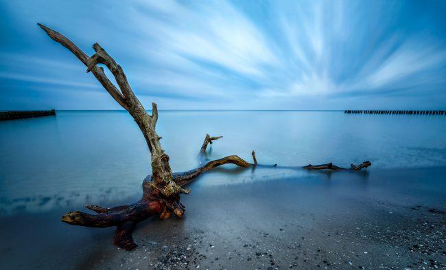 Strandgut an der Ostsee