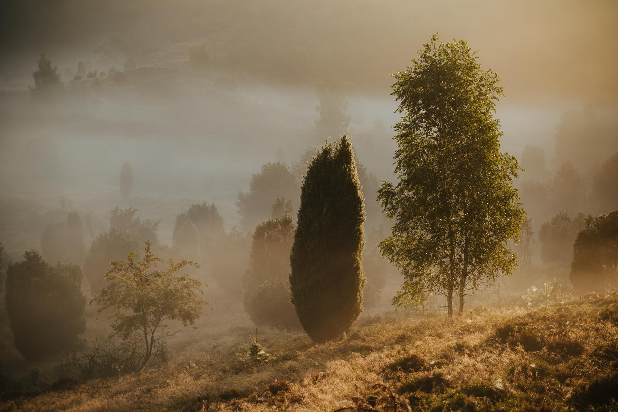 Tree friends - Three trees in the fog at sunrise